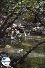 GriechenlandWeb.de Epta Piges - Zeven bronnen Rhodos - Rhodos Dodekanes - Foto 173 - Foto GriechenlandWeb.de
