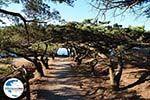 Filerimos Rhodos - Rhodos Dodekanes - Foto 304 - Foto GriechenlandWeb.de