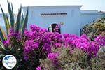 GriechenlandWeb.de Kalithea Rhodos - Rhodos Dodekanes - Foto 536 - Foto GriechenlandWeb.de