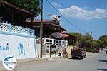 GriechenlandWeb.de Kiotari Rhodos - Rhodos Dodekanes - Foto 657 - Foto GriechenlandWeb.de
