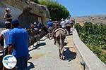 Lindos Rhodos - Rhodos Dodekanes - Foto 953 - Foto GriechenlandWeb.de