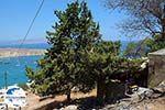 GriechenlandWeb.de Lindos Rhodos - Rhodos Dodekanes - Foto 974 - Foto GriechenlandWeb.de