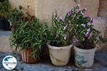 Rhodos Stadt Rhodos - Rhodos Dodekanes - Foto 1358 - Foto GriechenlandWeb.de