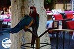 GriechenlandWeb Rhodos Stadt Rhodos - Rhodos Dodekanes - Foto 1372 - Foto GriechenlandWeb.de