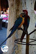 GriechenlandWeb.de Rhodos Stadt Rhodos - Rhodos Dodekanes - Foto 1374 - Foto GriechenlandWeb.de