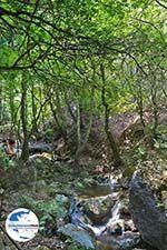GriechenlandWeb.de Vlindervallei Rhodos - Rhodos Dodekanes - Foto 1845 - Foto GriechenlandWeb.de
