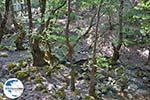 Vlindervallei Rhodos - Rhodos Dodekanes - Foto 1865 - Foto GriechenlandWeb.de