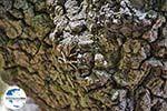 GriechenlandWeb Vlindervallei Rhodos - Rhodos Dodekanes - Foto 1872 - Foto GriechenlandWeb.de