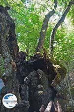 GriechenlandWeb.de Schmetterlingstal Rhodos - Foto GriechenlandWeb.de