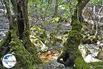 Vlindervallei Rhodos - Rhodos Dodekanes - Foto 1889 - Foto GriechenlandWeb.de