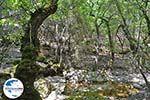 GriechenlandWeb.de Vlindervallei Rhodos - Rhodos Dodekanes - Foto 1890 - Foto GriechenlandWeb.de