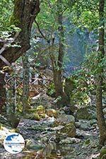 Vlindervallei Rhodos - Rhodos Dodekanes - Foto 1895 - Foto GriechenlandWeb.de