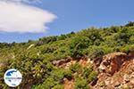 GriechenlandWeb Groene struiken ergen auf centraal Samos - Insel Samos - Foto GriechenlandWeb.de