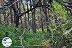 GriechenlandWeb.de Het bosrijke gebied Agios Konstandinos (vallei der nachtegalen) - Insel Samos - Foto GriechenlandWeb.de