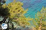 GriechenlandWeb.de Bomen tot aan de zee Kokkari (Strand Tsamadou) - Insel Samos - Foto GriechenlandWeb.de
