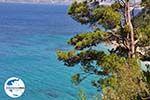 GriechenlandWeb.de Bomen totaan het Strandt van Kokkari (Tsamadou) - Insel Samos - Foto GriechenlandWeb.de