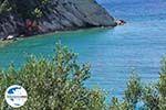GriechenlandWeb.de Olivenbäumen tot aan de zee - Lemonakia Kokkari- Insel Samos - Foto GriechenlandWeb.de