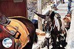 GriechenlandWeb.de Fira Santorin | Kykladen Griechenland  | Foto 0067 - Foto GriechenlandWeb.de
