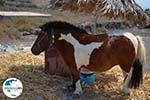 GriechenlandWeb.de Ergens langs de weg auf Santorin | Kykladen Griechenland | Foto 15 - Foto GriechenlandWeb.de