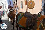 GriechenlandWeb Oia Santorin | Kykladen Griechenland | Foto 1173 - Foto GriechenlandWeb.de