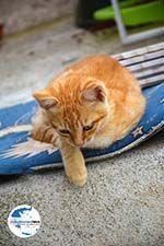 GriechenlandWeb.de Pyrgos Santorin | Kykladen Griechenland | Foto 176 - Foto GriechenlandWeb.de