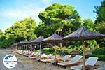 GriechenlandWeb Maratha beach Koukounaries | Skiathos Sporaden | GriechenlandWeb.de foto 11 - Foto GriechenlandWeb.de