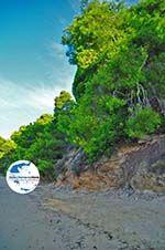 GriechenlandWeb Maratha beach Koukounaries | Skiathos Sporaden | GriechenlandWeb.de foto 13 - Foto GriechenlandWeb.de