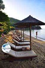 GriechenlandWeb.de Maratha beach Koukounaries   Skiathos Sporaden   GriechenlandWeb.de foto 14 - Foto GriechenlandWeb.de
