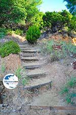 GriechenlandWeb.de Maratha beach Koukounaries | Skiathos Sporaden | GriechenlandWeb.de foto 16 - Foto GriechenlandWeb.de