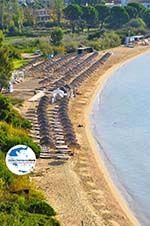 GriechenlandWeb.de Aghia Paraskevi (Platanias beach) | Skiathos Sporaden | GriechenlandWeb.de foto 6 - Foto GriechenlandWeb.de