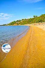GriechenlandWeb Aghia Paraskevi (Platanias beach) | Skiathos Sporaden | GriechenlandWeb.de foto 14 - Foto GriechenlandWeb.de