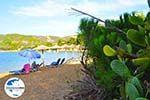 GriechenlandWeb.de Aghia Paraskevi (Platanias beach) | Skiathos Sporaden | GriechenlandWeb.de foto 31 - Foto GriechenlandWeb.de