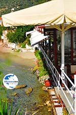 Megali Ammos (Ftelia) | Skiathos Sporaden | GriechenlandWeb.de foto 14 - Foto GriechenlandWeb.de