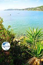 GriechenlandWeb.de Megali Ammos (Ftelia) | Skiathos Sporaden | GriechenlandWeb.de foto 15 - Foto GriechenlandWeb.de