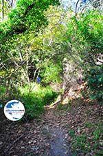 GriechenlandWeb.de Wandelpaden Klooster Kechria | Skiathos Sporaden | GriechenlandWeb.de foto 5 - Foto GriechenlandWeb.de