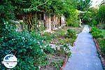 GriechenlandWeb Maniatis Garden Achladies | Skiathos Sporaden | GriechenlandWeb.de foto 5 - Foto GriechenlandWeb.de