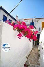 GriechenlandWeb Skopelos Stadt | Sporaden | GriechenlandWeb.de foto 64 - Foto GriechenlandWeb.de
