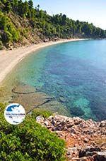 GriechenlandWeb Stafylos | Skopelos Sporaden | GriechenlandWeb.de foto 8 - Foto GriechenlandWeb.de