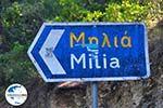 GriechenlandWeb.de Milia   Skopelos Sporaden   GriechenlandWeb.de foto 4 - Foto GriechenlandWeb.de