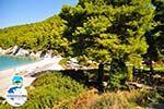 GriechenlandWeb Kastani | Skopelos Sporaden | GriechenlandWeb.de foto 14 - Foto GriechenlandWeb.de