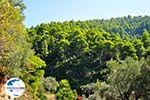 GriechenlandWeb.de Palio Klima (Oud Klima) | Skopelos Sporaden | GriechenlandWeb.de foto 3 - Foto GriechenlandWeb.de