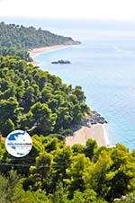 GriechenlandWeb.de Strände Kastani und Milia |Skopelos Sporaden | GriechenlandWeb.de foto 7 - Foto GriechenlandWeb.de