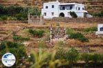 GriechenlandWeb.de Karkados und Kalloni Tinos | Griechenland | Foto 9 - Foto GriechenlandWeb.de
