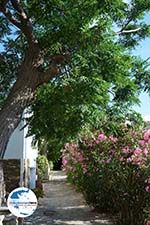 GriechenlandWeb.de Agapi Tinos | Griechenland | GriechenlandWeb.de foto 26 - Foto GriechenlandWeb.de