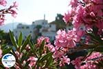 GriechenlandWeb.de Agapi Tinos | Griechenland | GriechenlandWeb.de foto 28 - Foto GriechenlandWeb.de