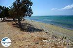 GriechenlandWeb.de Badplaats Aghios Fokas ten oosten van Tinos Stadt | Foto 12 - Foto GriechenlandWeb.de