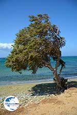 GriechenlandWeb.de Badplaats Aghios Fokas ten oosten van Tinos Stadt   Foto 14 - Foto GriechenlandWeb.de