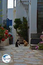 GriechenlandWeb.de Falatados Exomvourgo Tinos | Griechenland | Foto 24 - Foto GriechenlandWeb.de