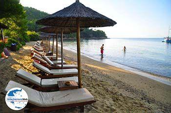 Maratha beach Koukounaries | Skiathos Sporaden | GriechenlandWeb.de foto 15 - Foto von GriechenlandWeb.de