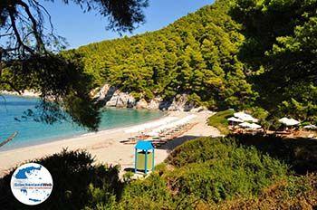 Kastani | Skopelos Sporaden | GriechenlandWeb.de foto 6 - Foto von GriechenlandWeb.de